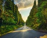 Bolgheri e i grandi rossi di Toscana