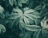 Una primavera sotto zero