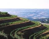 Castello della Sala, l'Umbria secondo Antinori