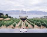 Prämierte Weine aus Apulien