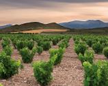 3 nomi per un vitigno