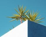 Due Palme: Pretty in Puglia