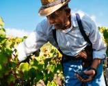Vins artisanaux